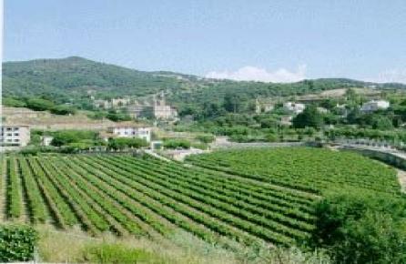 Viñas de Alella