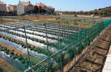 Zona de cultiu a Santa Susanna