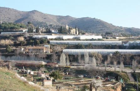 Vista de zona de cultiu a Tiana
